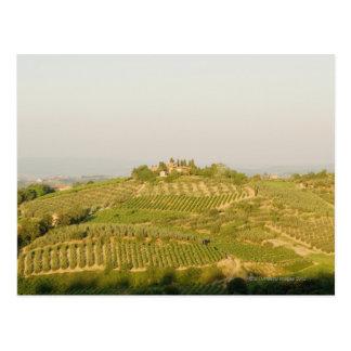 Hohe Winkelsicht eines Weinbergs, Siena-Provinz, Postkarte