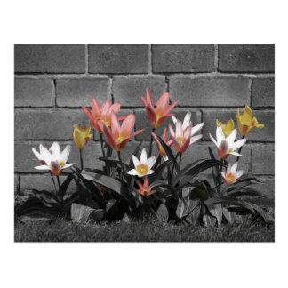 Hübsche Blumenpostkarte Postkarte