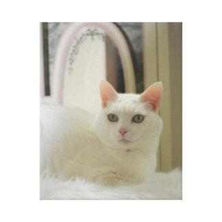 Hübsche kleine weiße Katze Gespannte Galeriedrucke