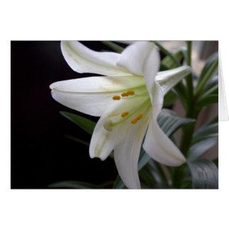 Hübsche, reine weiße Osterlilien-Blume im Karte