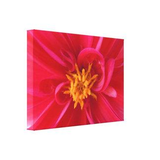 Hübsche rote Dahlie - Leinwand Druck