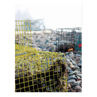 Hummer-Fallen auf felsigem Strand Postkarte