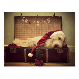 Hund, der im Koffer schläft Postkarte