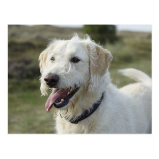 Hund im Heideland Postkarte