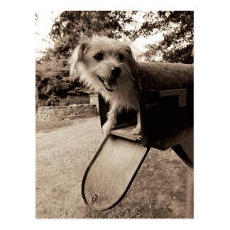 Hund innerhalb eines Briefkastens Postkarte