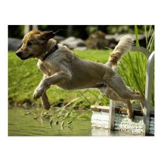 Hund springt in Teich Postkarte