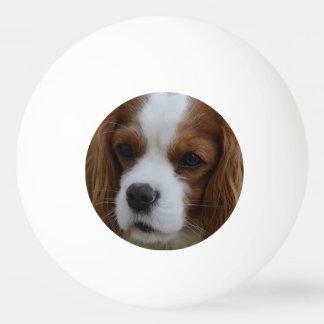 Hund Tischtennis Ball