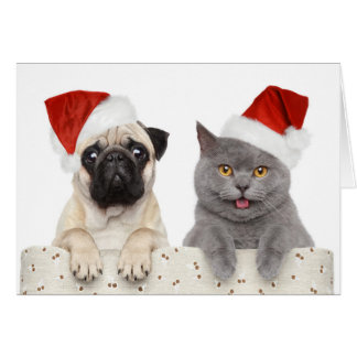 Hund und Katze im roten Weihnachtshut Grußkarte