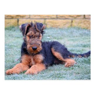 Hündchen-Grün-Postkarte Airedales Terrier Postkarte