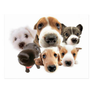 Hunde, Hunde, Hunde Postkarten