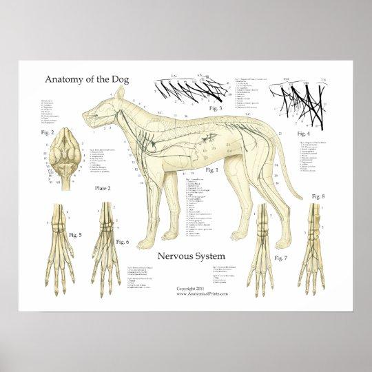 HundeNervensystem-Anatomie-Plakat-Diagramm Poster | Zazzle.at