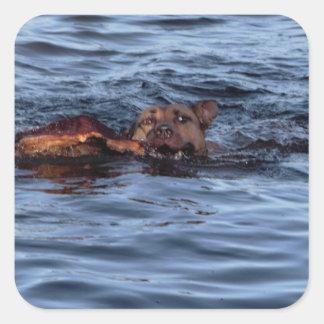 Hundeschwimmen im Fluss Quadratischer Aufkleber