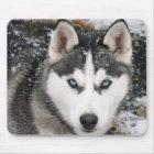 Husky-Hündchen im Schnee Mousepad