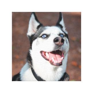 Huskyhundeblaue Augen Leinwand Drucke