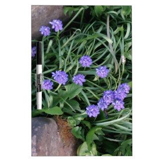 Hyazinthe der allgemeinen Traube, blaue lila Memoboard
