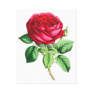 Hybride unaufhörliche Rose - Napoleon III Leinwanddrucke