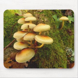 Hypholoma fasciculare Pilz Mauspad