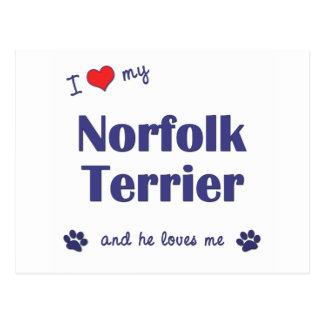 I Liebe mein Norfolk-Terrier (männlicher Hund) Postkarte