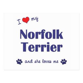 I Liebe mein Norfolk-Terrier (weiblicher Hund) Postkarte