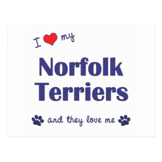 I Liebe meine Norfolk-Terrier (mehrfache Hunde) Postkarte