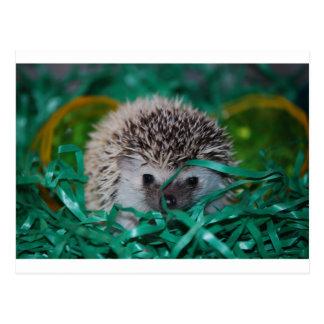 Igels-Baby in Ostern-Gras Postkarte