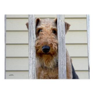 """Im Doghouse "" Postkarten"