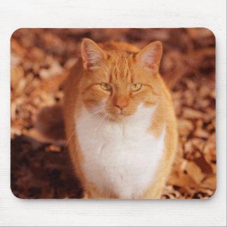 Ingwertabby-Katzen-Mausunterlage Mousepad