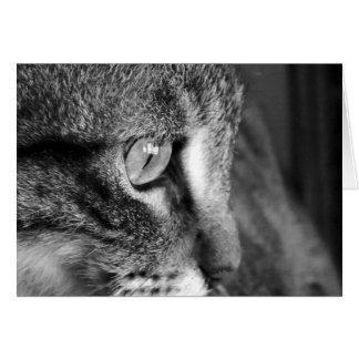 Intensive Katze Karte