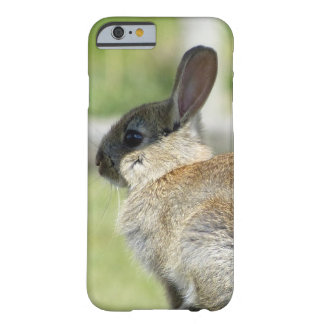 iPhone 6 Fall mit Kaninchen im Profil Barely There iPhone 6 Hülle