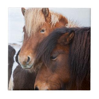 Isländisches Pferd während des Winters auf Island Kleine Quadratische Fliese