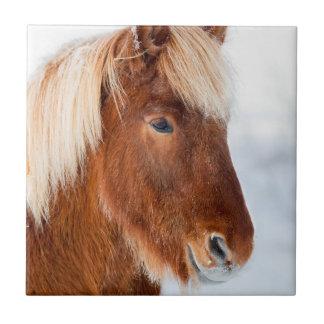 Isländisches Pferd während des Winters nahe See Fliese