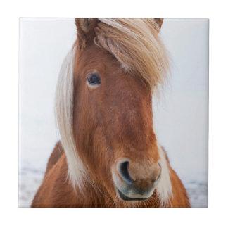Isländisches Pferd während Winters 2 Fliese