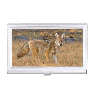 Jagd des Kojote-(Canis Latrans) Visitenkarten Etui