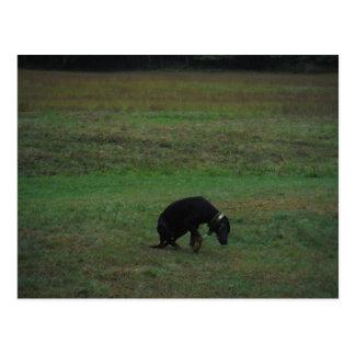 Jagdhund, der die Verfolgung aufgibt Postkarte
