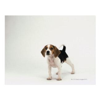 Jagdhund Postkarte