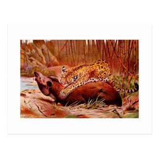 Jaguar und Tapir Postkarte