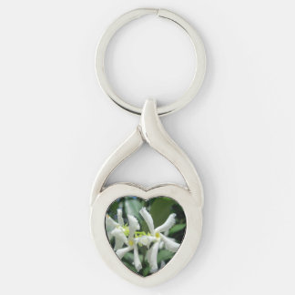 Jasmin-weiße Rohr-Blume Silberfarbener Herz Schlüsselanhänger
