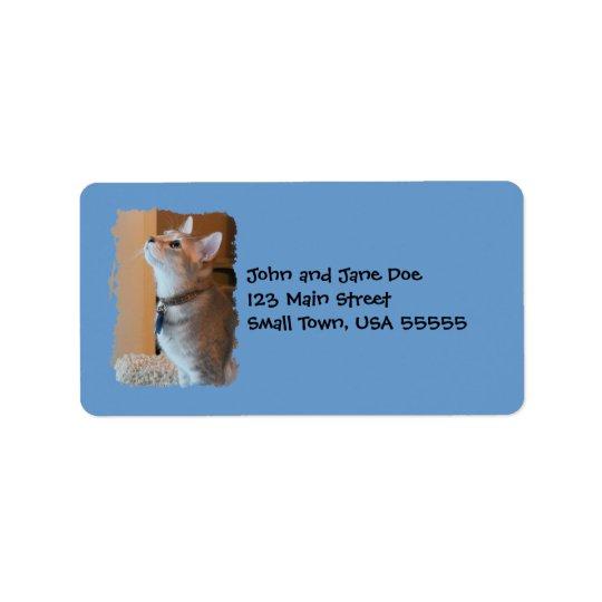 Jaspis-Kätzchen-Foto-blaue Adressen-Etiketten Adressaufkleber