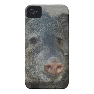 Javelina oder Peccary Case-Mate iPhone 4 Hülle