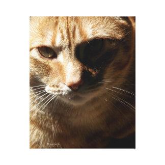 jjhelene Modi Bär, bengalische Katze, Leinwanddruck
