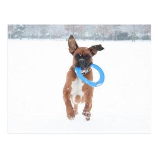 Jolie, das frizbee im Schnee spielt Postkarte