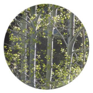 Junge Aspen-Bäume Teller