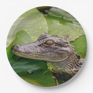 Junger Alligator Pappteller