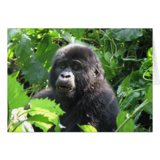 Junger Berggorilla des Nkuringo Gro Karte