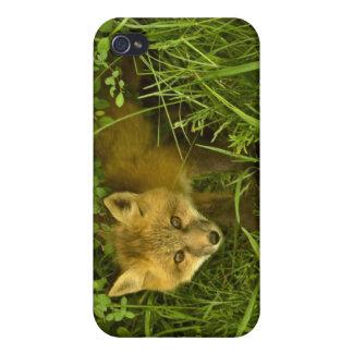 Junger roter Fox, der vom Verstecken in den iPhone 4/4S Case