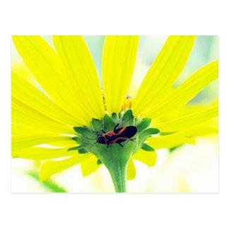 Käfer unter gelber Blume Postkarte