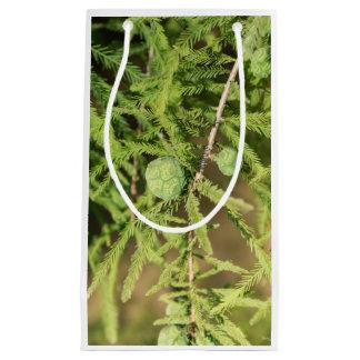 Kahle Zypresse-Samen-Kegel Kleine Geschenktüte
