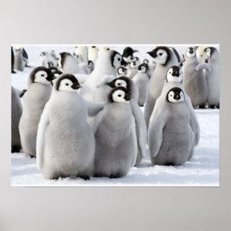 Kaiser-Pinguin-Kükenplakat Poster