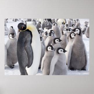 Kaiser-Pinguin mit Kükenplakat Poster