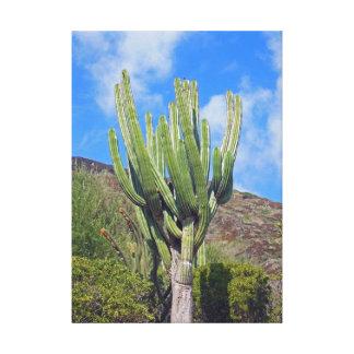 Kaktus Leinwanddrucke